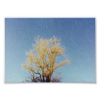 Tree Series - #2 Photo Print