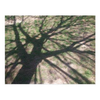 Tree Shadow Postcard