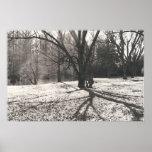 Tree Shadow Print