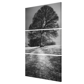 Tree Shaped by the Wind Canvas Print