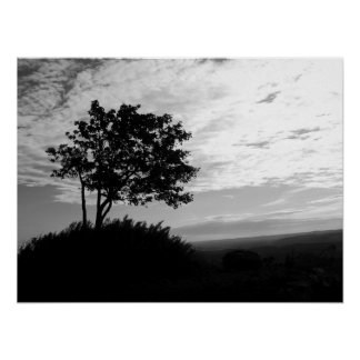 Tree Silhouette Monochrome Poster