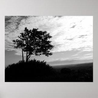 Tree Silhouette Monochrome Posters