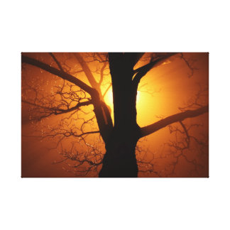 Tree Silhouette on a warm, orange sunny background Canvas Print