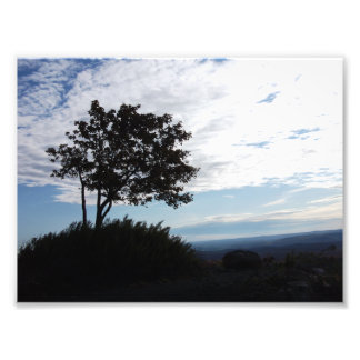 Tree Silhouette Photo Print