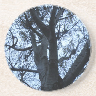 Tree Silhouette Photograph Coasters