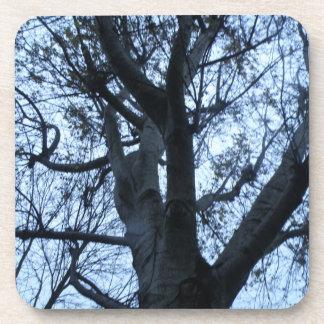 Tree Silhouette Photograph Cork Coasters