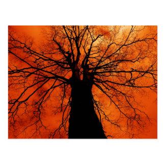 Tree Silhouette - Postcard