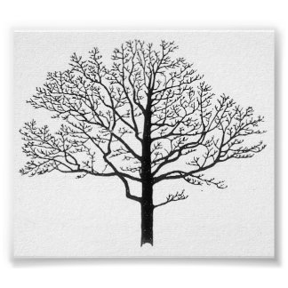 Tree Silhouette Posters