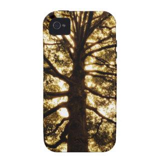 Tree Silhouette Sepia iPhone 4 Case