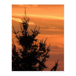 Tree silhouette with sunset postcard