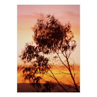 Tree Silhouettes at Dusk Poster