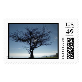 Tree Sillouette Postage
