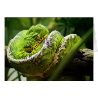 Tree Snake Greeting Card