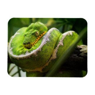 Tree Snake Magnet