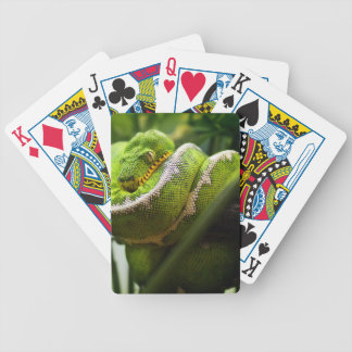 Tree Snake Playing Cards
