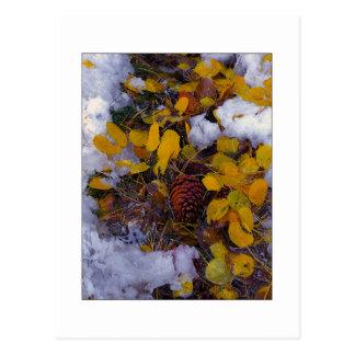 """""""Tree Soup"""" Postcard"""