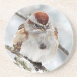Tree Sparrow in Winter Coaster