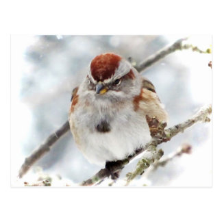Tree Sparrow in Winter Postcard