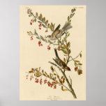 Tree Sparrow Poster