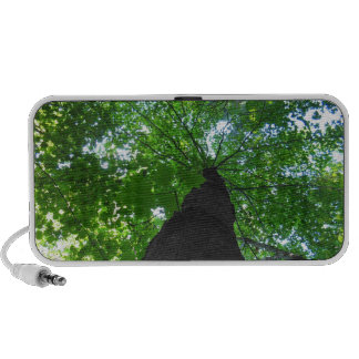 Tree Speaker