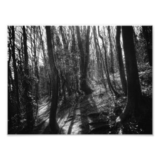 Tree Spirits Photo Print
