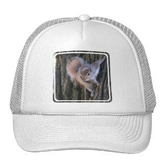 Tree Squirrel  Baseball Hat