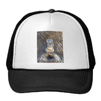 TREE SQUIRREL HATS