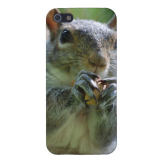 Tree Squirrel Cases For iPhone 5