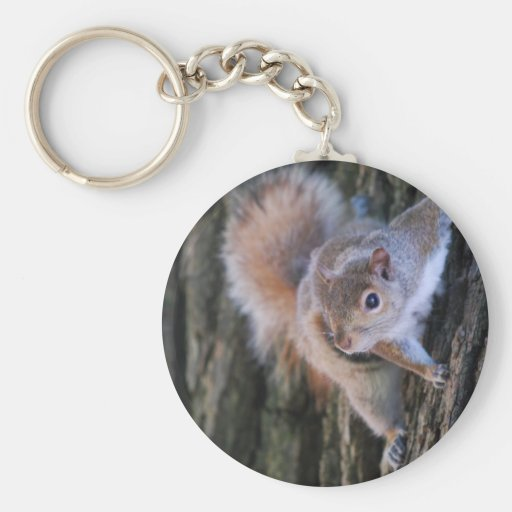 Tree Squirrel  Keychain