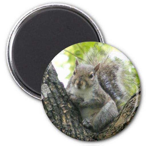 Tree Squirrel Magnet