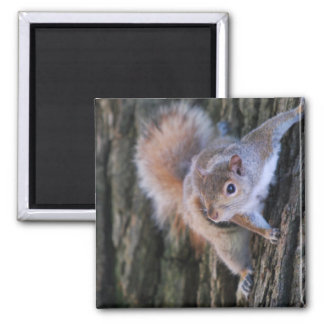 Tree Squirrel Magnet