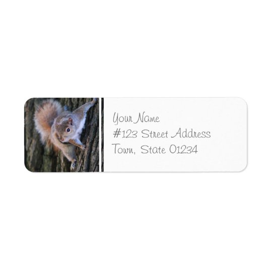 Tree Squirrel  Mailing Labels