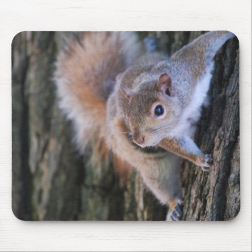 Tree Squirrel  Mouse Pad