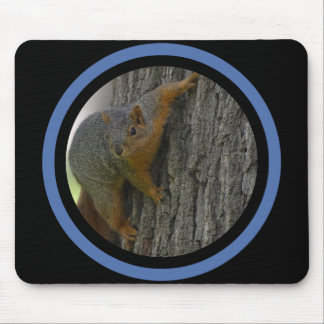 Tree Squirrel - Multi Frame Mouse Pad
