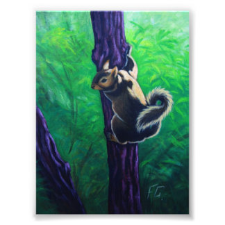 tree squirrel photo print