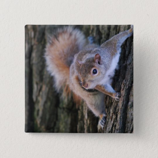 Tree Squirrel  Pin
