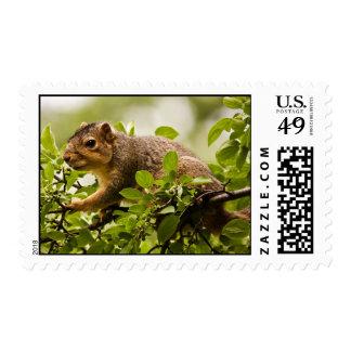 Tree Squirrel Postage