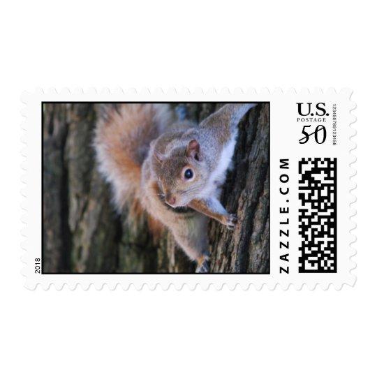 Tree Squirrel  Postage Stamp