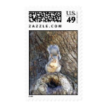TREE SQUIRREL POSTAGE STAMPS