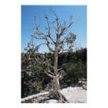 Tree Stands Alone Poster