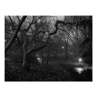 Tree Steals Light Poster
