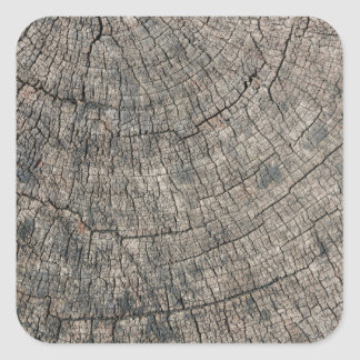 Tree Stump Closeup Square Sticker