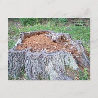 Tree Stump Postcard postcard