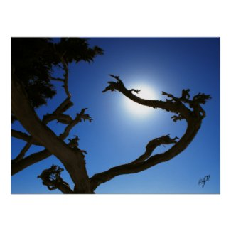 Tree Sun print