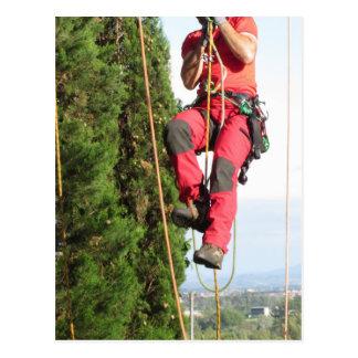 Tree surgeon lumberjack hanging from a big tree postcard