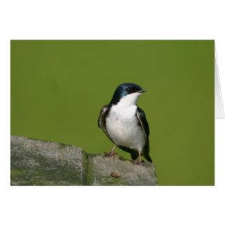 tree swallow card