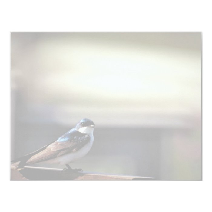 Tree swallow card