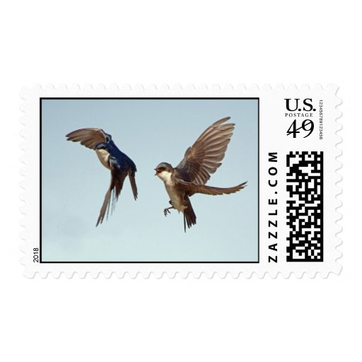 Tree Swallow Chase Postage