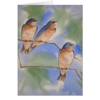 Tree Swallow Fledglings Card
