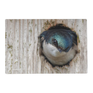 Tree Swallow in a Nestbox Placemat